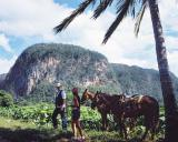 Kuba-News.de - Kuba Infos & Kuba Tipps | Foto: Kubas Berglandschaft mit dem Pferd erkunden, Cubanisches Fremdenverkehrsamt
