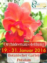 Foto: Orchideengarten Karge bei der Orchideenschau 2016 im Botanischen Garten Potsdam