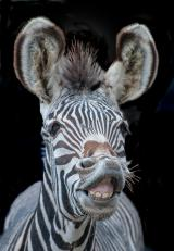 Tier Infos & Tier News @ Tier-News-247.de | Foto: Fotoseminar im Zoo Berlin
