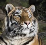 Zoo-News-247.de - Zoo Infos & Zoo Tipps |