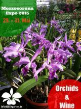 Orchideen-Seite.de - rund um die Orchidee ! | Foto: Orchideengarten Karge auf der Mezzocorona Expo 2015 Orchids&Wine