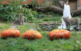 Zoo-News-247.de - Zoo Infos & Zoo Tipps | Foto: Filou und Emilija mit ihrem Taufgeschenk.