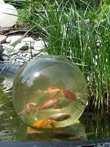 Tier Infos & Tier News @ Tier-News-247.de | Foto: Blubb - die Teichkugel bietet Fischen eine neue Perspektive!