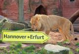 Tier Infos & Tier News @ Tier-News-247.de | Foto: Joco zieht nach Erfurt.