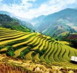 Ost Nachrichten & Osten News | Foto: Die riesigen Reisterrassen von Sapa in Vietnam. Quelle: Tour Vital
