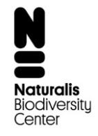 Orchideen-Seite.de - rund um die Orchidee ! | Foto: Logo Naturalis Biodiversity Center