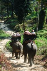 Ost Nachrichten & Osten News | Foto: Elefantenritt in Thailand