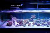 Aquaristik-Infos-247.de - Aquaristik Infos & Aquaristik Tipps | Foto: Teil der Korallenanlage.