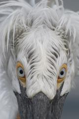 Tier Infos & Tier News @ Tier-News-247.de | Foto: Tierfotografie in den Zoos Münster, Hamburg, Hannover und Nürnberg!