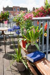 Orchideen-Seite.de - rund um die Orchidee ! | Foto: Wohlfühl-Sommer auf dem eigenen Balkon
