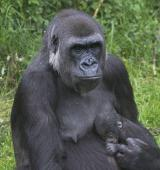 Tier Infos & Tier News @ Tier-News-247.de | Foto: Mutter mit Neugeborenem.