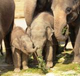Zoo-News-247.de - Zoo Infos & Zoo Tipps | Foto: Taru beim Buffet.