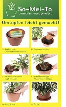 Orchideen-Seite.de - rund um die Orchidee ! | Foto: So-Mei-To-System