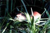 Tier Infos & Tier News @ Tier-News-247.de | Foto: aQto verlängert die Tierpatenschaft im Zoo Leipzig