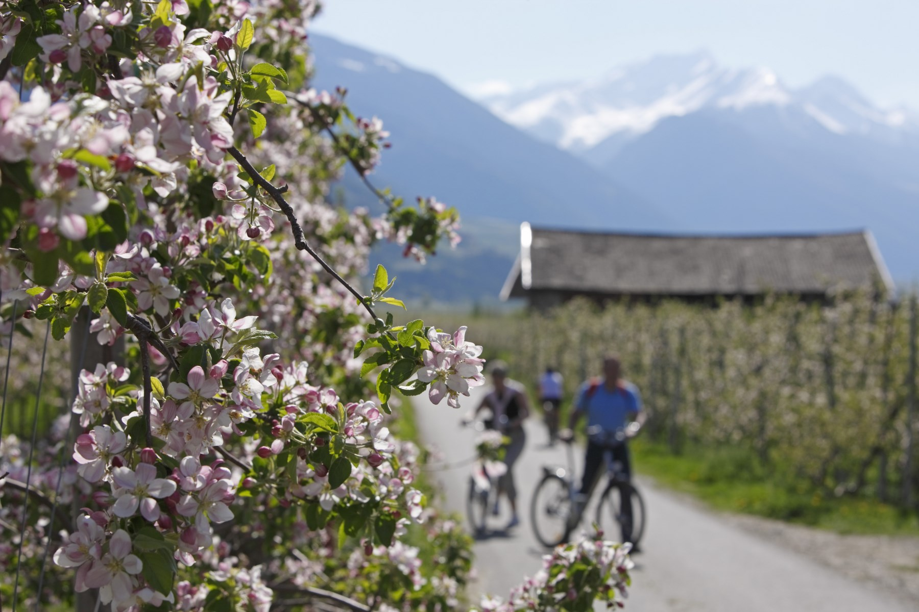 Technik-247.de - Technik Infos & Technik Tipps | Frühlings-Radtour durch blühende Apfelwiesen – Frieder Blickle - MGM