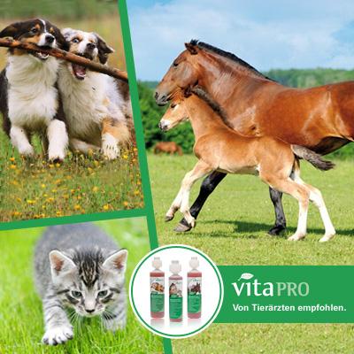 Tier Infos & Tier News @ Tier-News-247.de | Vita pro für Katzen, Hunde und Pferde