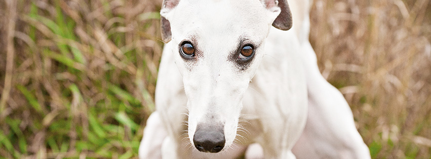Tier Infos & Tier News @ Tier-News-247.de | Hundeblicke – Hunde beim Kacken.