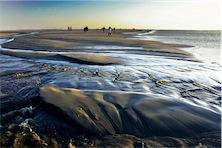 BIO @ Bio-News-Net | Wittke: Wattenmeer